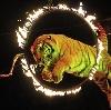 Цирки в Фатеже