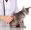 Ветеринарные клиники в Фатеже